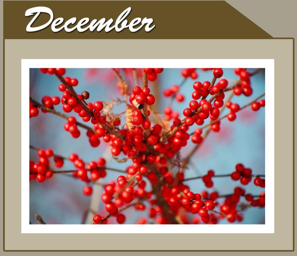 This Month Banner_short_Dec