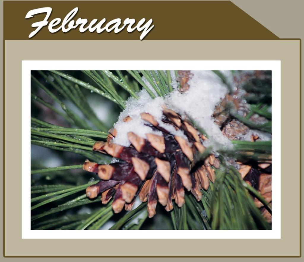 This Month Banner_short_Feb