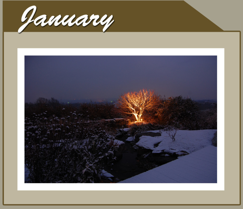 This Month Banner_short_Jan