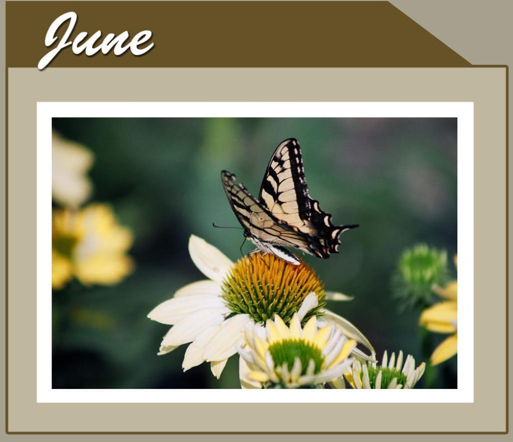 This Month Banner_short_Jun