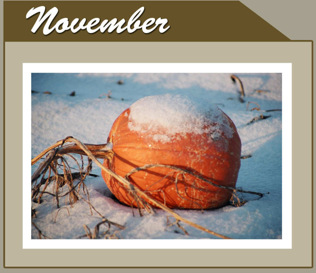 This Month Banner_short_Nov