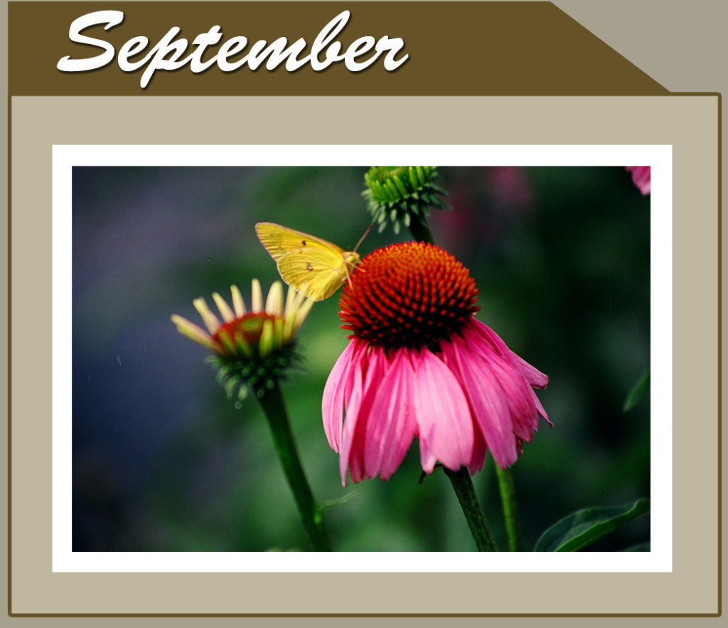 This Month Banner_short_Sep